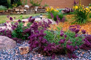 xeriscaped landscape - water efficient