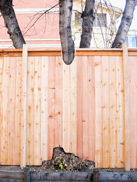 integrate trees into fence denver